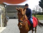 Cheval Scoop - Trotteur français Mâle (7 ans)