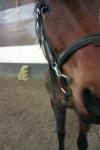 Cheval Reine - Trotteur français Femelle (9 ans)
