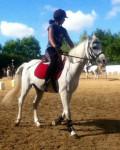 Cheval Gérico - Pur sang arabe Mâle (12 ans)
