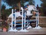 Cheval Qalypso - KWPN Femelle (8 ans)