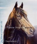 Cheval Acrylmalerei - Traber - KWPN Mâle (4 ans)