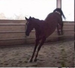 Cheval Thao - Holsteiner Mâle (5 ans)