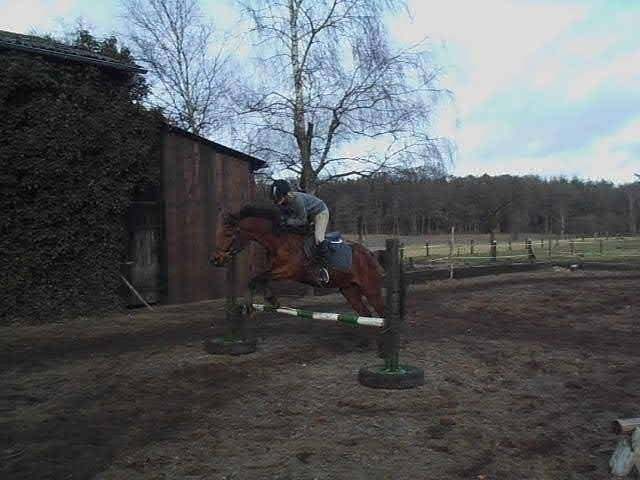 Cheval Don´t Touch - Holsteiner Mâle (6 ans)