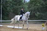 Cheval Acy - Oldenbourg Femelle (18 ans)