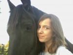 Cheval moi et black-beauty - Frison Mâle (2 ans)