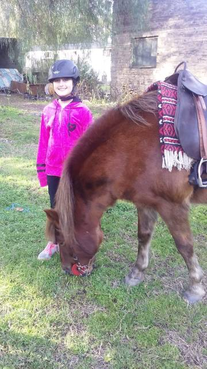 Cheval malambo - Frison Mâle (10 ans)