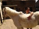 Cheval Cécilia - Paint horse Femelle (14 ans)