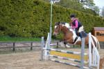 Cheval princess - Paint horse Femelle (5 ans)