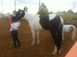 Cheval Moons R Eternal - Paint horse Femelle (10 ans)