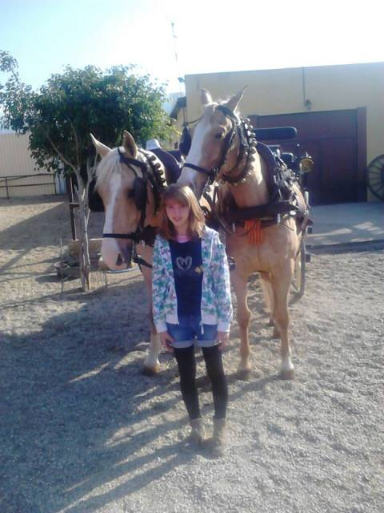 Cheval diamante y juncal - Hanovrien Mâle (15 ans)