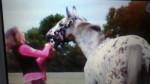 Cheval Princesse et moi - Appaloosa Femelle (12 ans)