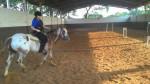 Cheval Big Time Rush - Appaloosa Femelle (8 ans)