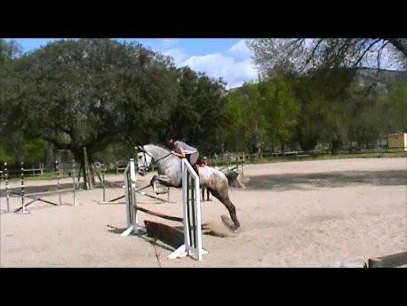 Cheval Famosa - Lipizzan Femelle (6 ans)