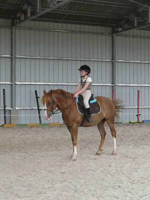 Cheval saphir et moi - Lipizzan Femelle (6 ans)