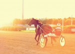 Cheval First Race of the Morning - Trotteur américain  (0 mois)