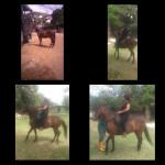 Cheval Travieso Villamanuela - Pure race espagnole (PRE) Mâle (12 ans)