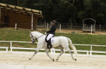 Cheval Malagueño XXXIII - Pure race espagnole (PRE) Mâle (13 ans)