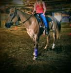 Cheval Lilly - Quarter Horse Femelle (10 ans)