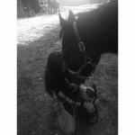 Cheval Annie - Quarter Horse Femelle (6 ans)