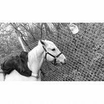 Cheval Cash - Quarter Horse Mâle (11 ans)