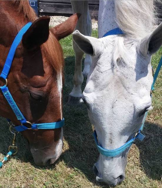 Cheval Chief and Maggie - Quarter Horse  (0 mois)