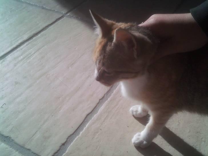 Cheval chataigne - Camargue Femelle (9 mois)
