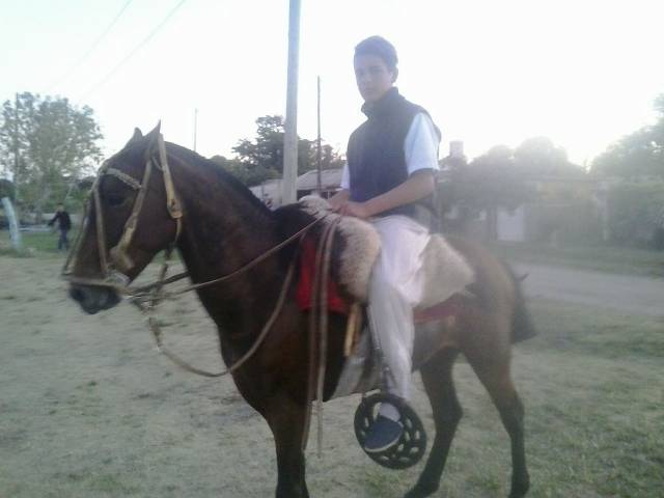 Cheval Mugroso - Criollo Mâle (5 ans)