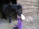Poney Kinder - Shetland Mâle (4 ans)