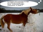 Poney Moka montage - Haflinger Mâle (Vient de naître)