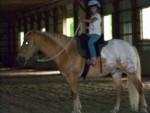 Poney Ricky - Haflinger Mâle (8 ans)