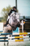 Poney Concours Willow & Odyssée P2 - Connemara Femelle (10 ans)