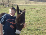 Âne Jack - Âne gris Mâle (6 ans)