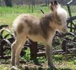 Âne FUZZY - Âne gris Mâle (3 mois)