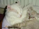 Chat Maman et filles -  (Vient de naître)