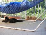 Chat Tassili et Tao prennent le soleil -  (Vient de naître)