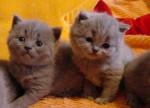 Chat  -  (Vient de naître)