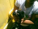 Chien Oso - Femelle (2 mois)