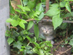 Chien chat commun -  (Vient de naître)