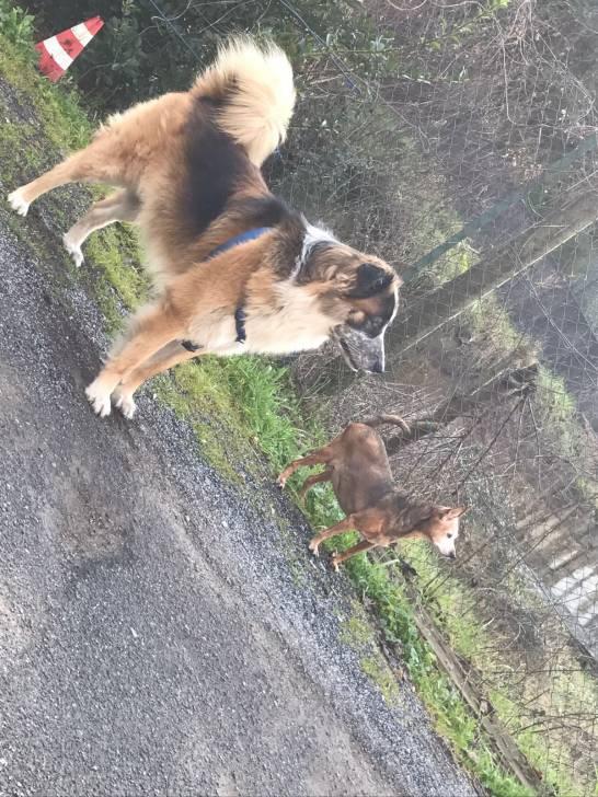 Chien Jake e Lola - Femelle (12 ans)