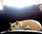 Chien Roxy -  Femelle (4 ans)