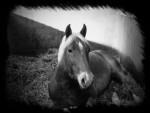 Cheval spirit -  Mâle (Vient de naître)