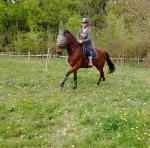 Cheval Averss -  Mâle (6 ans)