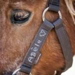 Cheval girouette -  Femelle (Vient de naître)