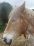 Cheval jfc123 -  Femelle (7 ans)