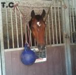 Cheval Lucky Day -  Femelle (9 ans)