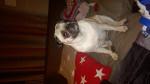 Chien Rosie -  Femelle (2 ans)