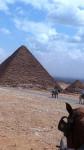 Cheval caballo -  Femelle (0 mois)