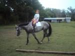 Cheval Lacie -  Femelle (7 ans)