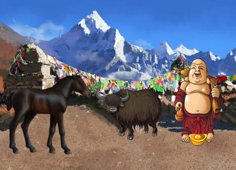 Venu du coeur de l'Himalaya, le poney du Bhoutan fait son arrivée sur Horzer!