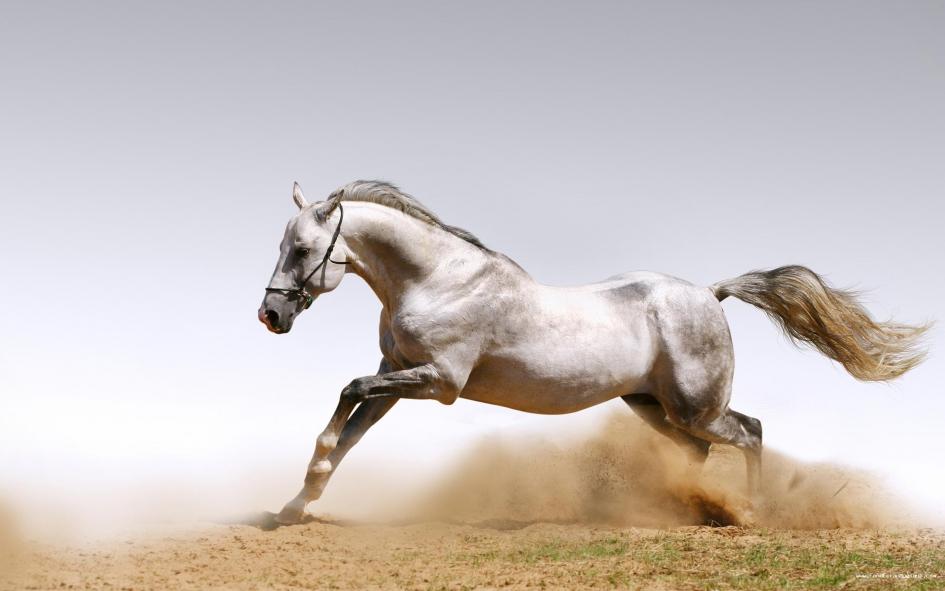 cheval au vent